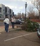 Tree Down at Highland Square.